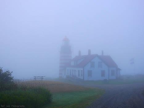 Beauty in the Fog by Teri Ridlon