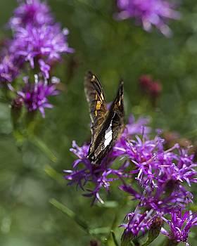 Beauty in the Garden by Nikki McInnes