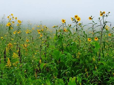 Beauty in the Mist by Lori Frisch