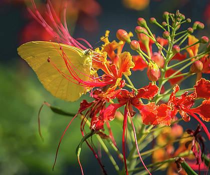 Beauty in Yellow by Leticia Latocki