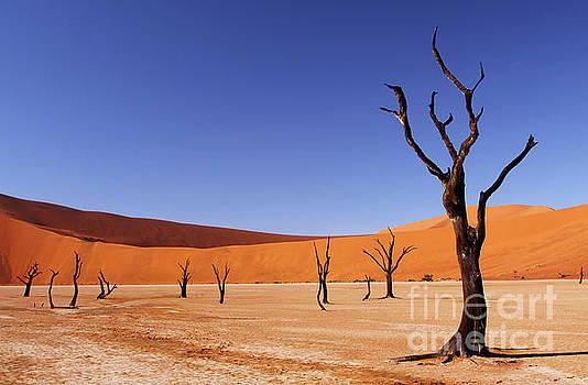 Beauty of Dead Vlei, Namibia by Wibke W