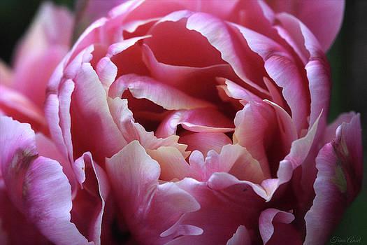 Beauty on the Inside by Trina Ansel
