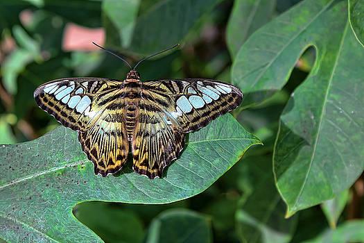 Beauty On Wings by Ryan Seek