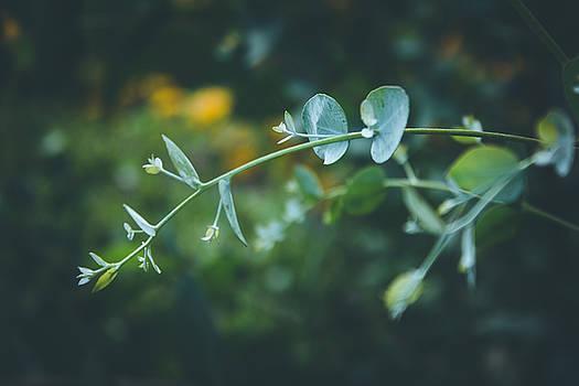 Beauty Plant by Cindy Grundsten