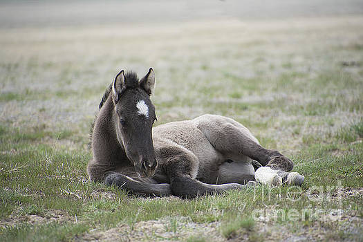 Beauty Rest by Nicole Markmann Nelson