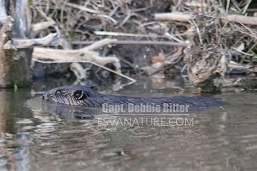 Beaver 0530 by Captain Debbie Ritter