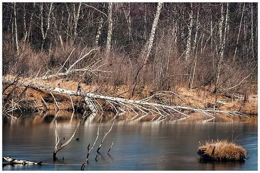 Beaver Creek by Gina Broma