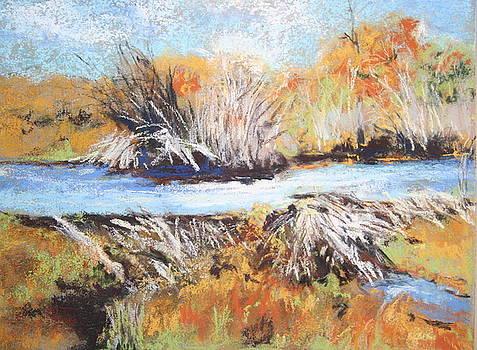 Beaver Dam by Deborah Voyda Rogers