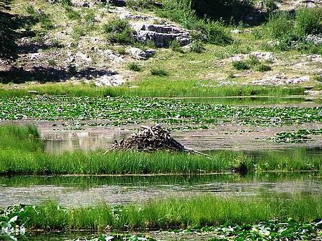 Beaver Dam by Peter  McIntosh