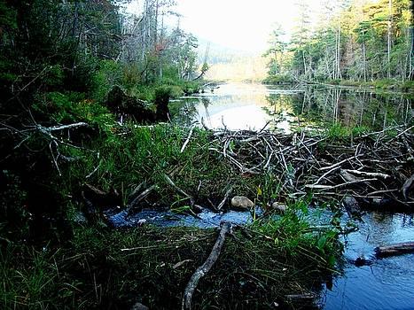 Beaver Dam by Yvonne Breen