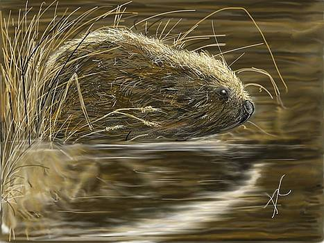 Beaver by Darren Cannell