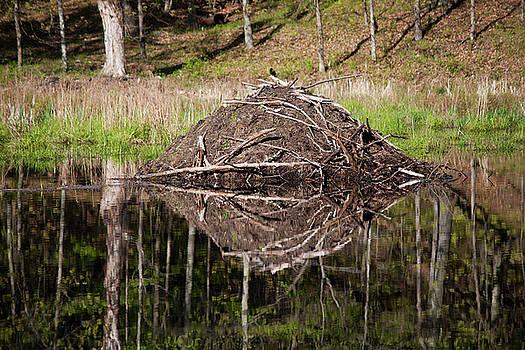 Beaver Lodge Reflection by Jeff Severson