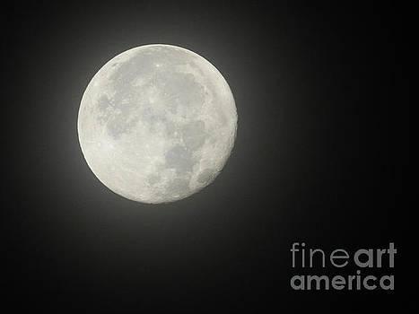Beaver Moon by Ruth Housley