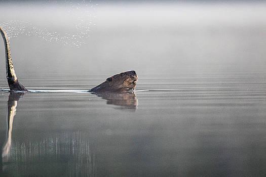 Beaver Tail by Darryl Hendricks