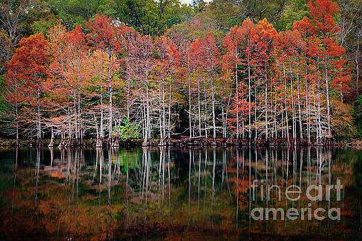 Beaver's Bend Cypress Soldiers by Tamyra Ayles