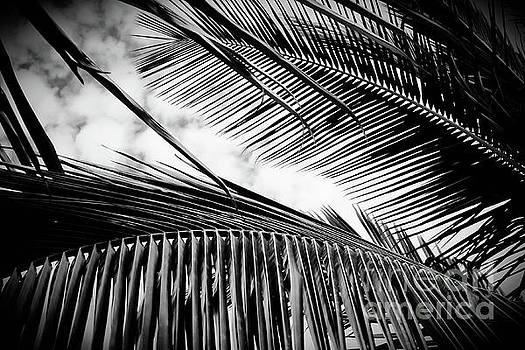 Maui Paradise Palms Monochrome by Sharon Mau