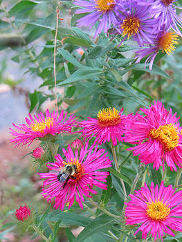 Bee and blooms by Pamela Turner