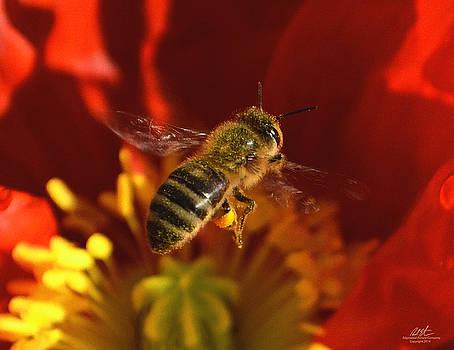 Bee and Poppy by Richard Estrada