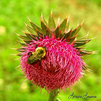 Bee and Thistle by Lorraine Louwerse
