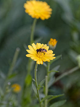Bee at work on top by Adrian Bud