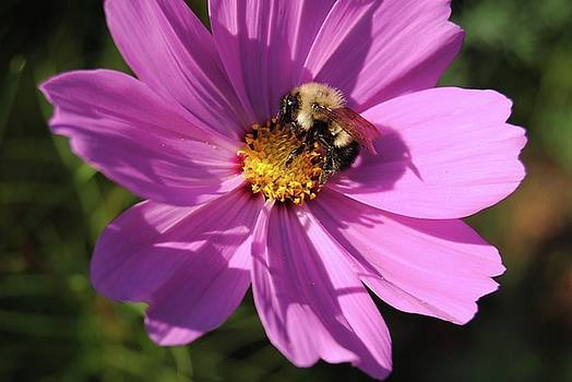 Bee at work by Pamela Keene