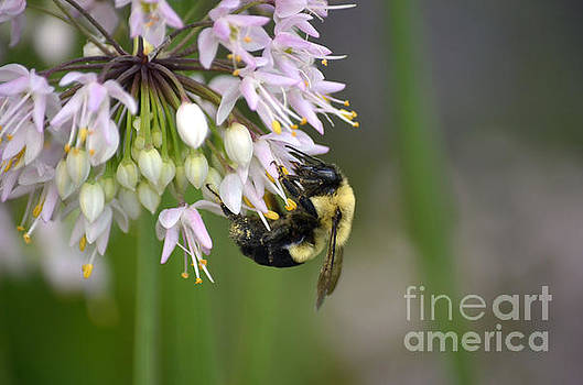 Bee Bounty by Deb Halloran