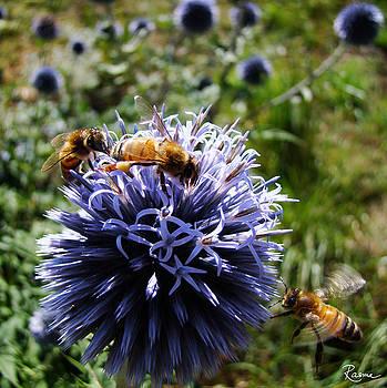 Rasma Bertz - Bee Circles