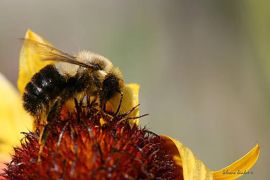 Bee Four by Silvana Siudut