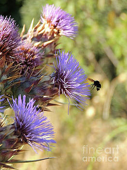 Bee in FLight by Robert Ball