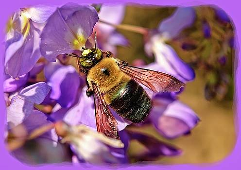 Bee in Spring by Susan Leggett