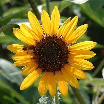 Bee in the Sun by Billie Jean Lamb