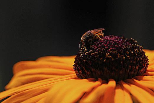 Juergen Roth - Bee Inspiring