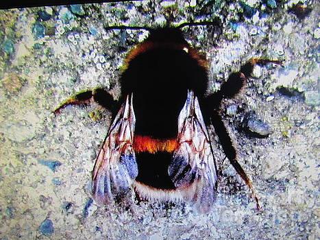 Bee by Joyce Woodhouse