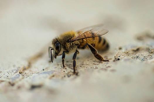 Bee by Khalid Mahmoud