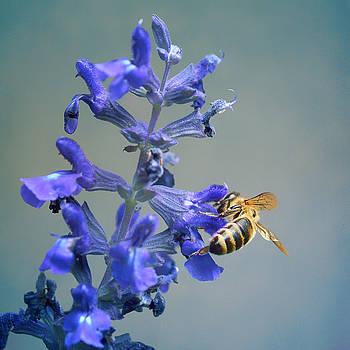 Nikolyn McDonald - Bee - Salvia