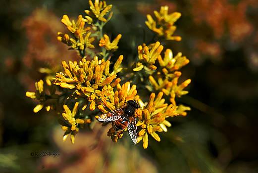 Bee on Autumn Bloom by Kae Cheatham