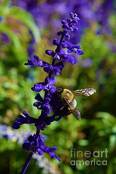 Bee On Blue Flower by Sharon Patterson