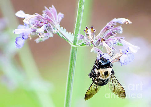 Bee on Flower by Carolyn Abell Hodges
