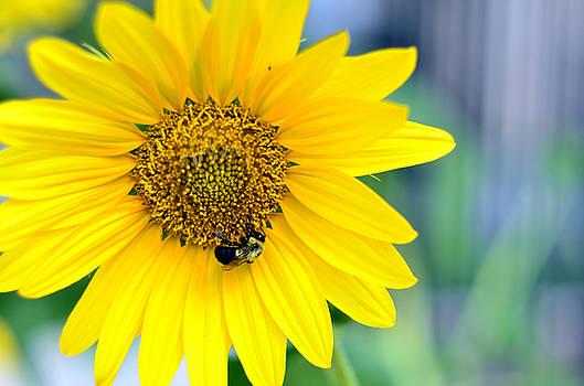 Bee on Flower by La Dolce Vita