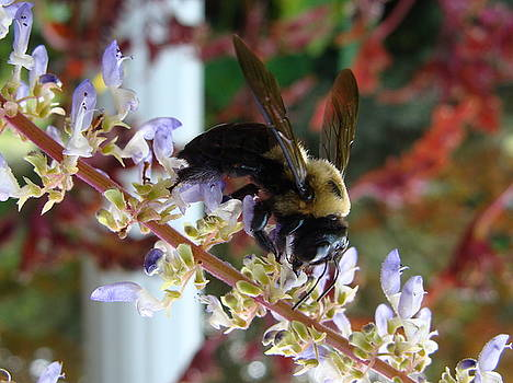 Bee on Flower by Ramona Barnhill
