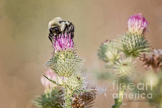 Bee on Thistle Weed by Laurinda Bowling