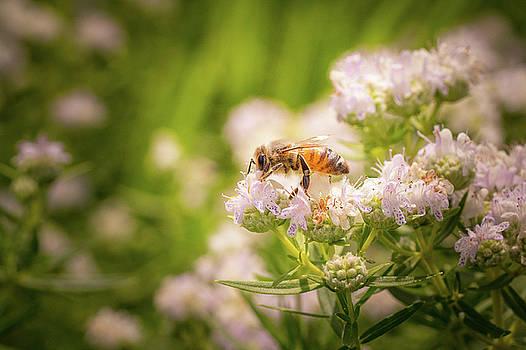 Bee on White Flower Macro by Joni Eskridge