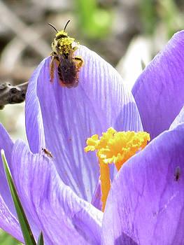 Bee Pollen by Azthet Photography