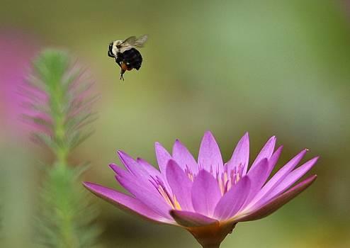 Paulette Thomas - Bee Pollen