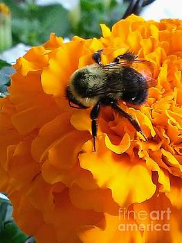Bee Resting by Marlene Williams