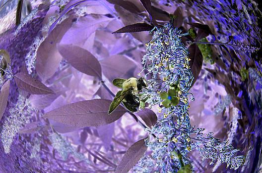 Bee by Rich Stecher