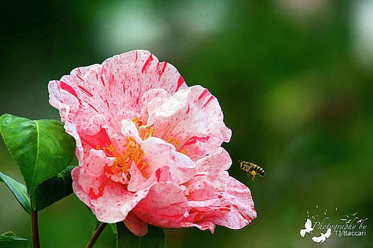Bee-utiful by TJ Baccari