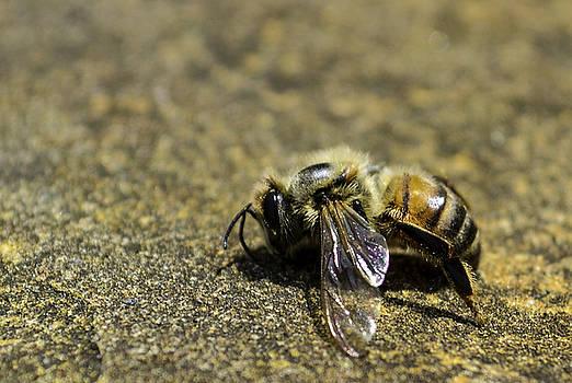 Bee by Victoria Dietz