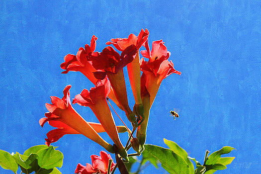 Bee with Trumpet Flowers 2 by Bonnie Follett