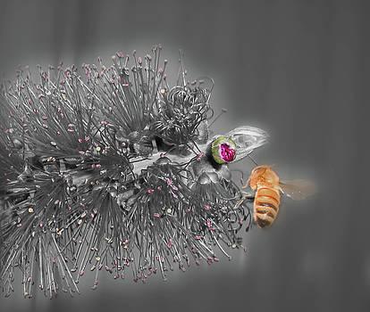 Beeautiful by Kelly Jones